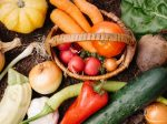 秩父で農業体験 野菜収穫