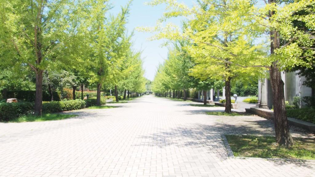 ミューズパークの銀杏並木