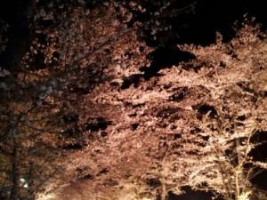 長瀞 桜ライトアップ