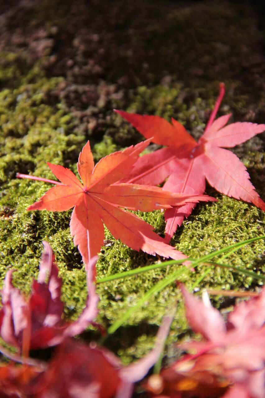秩父大滝で紅葉まつり開催 日程やイベント内容など