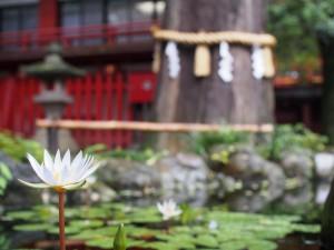 秩父神社の池