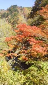 秩父大滝の中津狭の紅葉2015