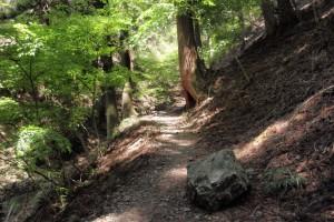 初夏の武甲山 登山道