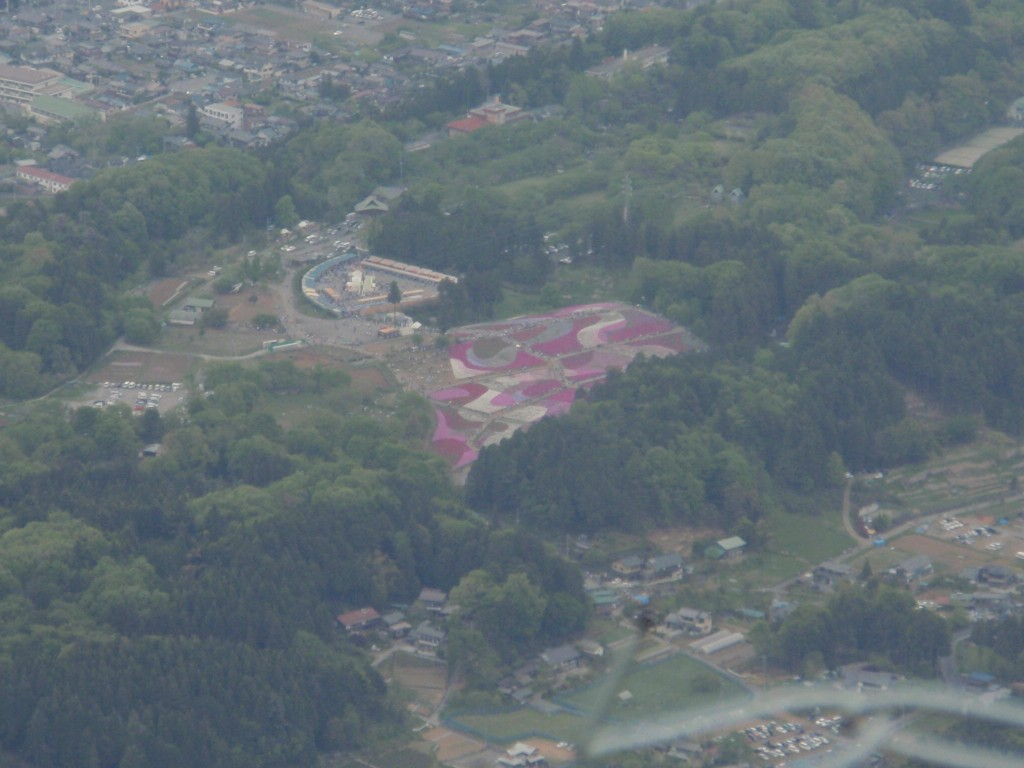 武甲山から見た羊山公園の芝桜の丘