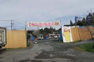 芝桜まつりの準備2016.4.8