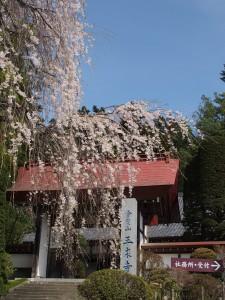 札所23番音楽寺と桜