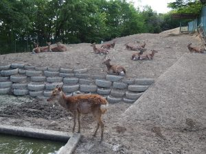 小鹿神社 鹿
