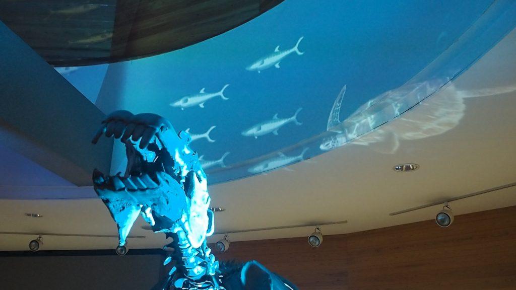 ようばけ プレミアムナイト おがの化石館