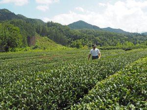 出浦園の茶畑と出浦さん