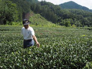 茶畑の出浦さん