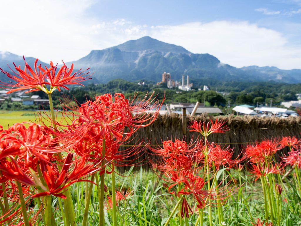 2016年の武甲山と曼珠沙華