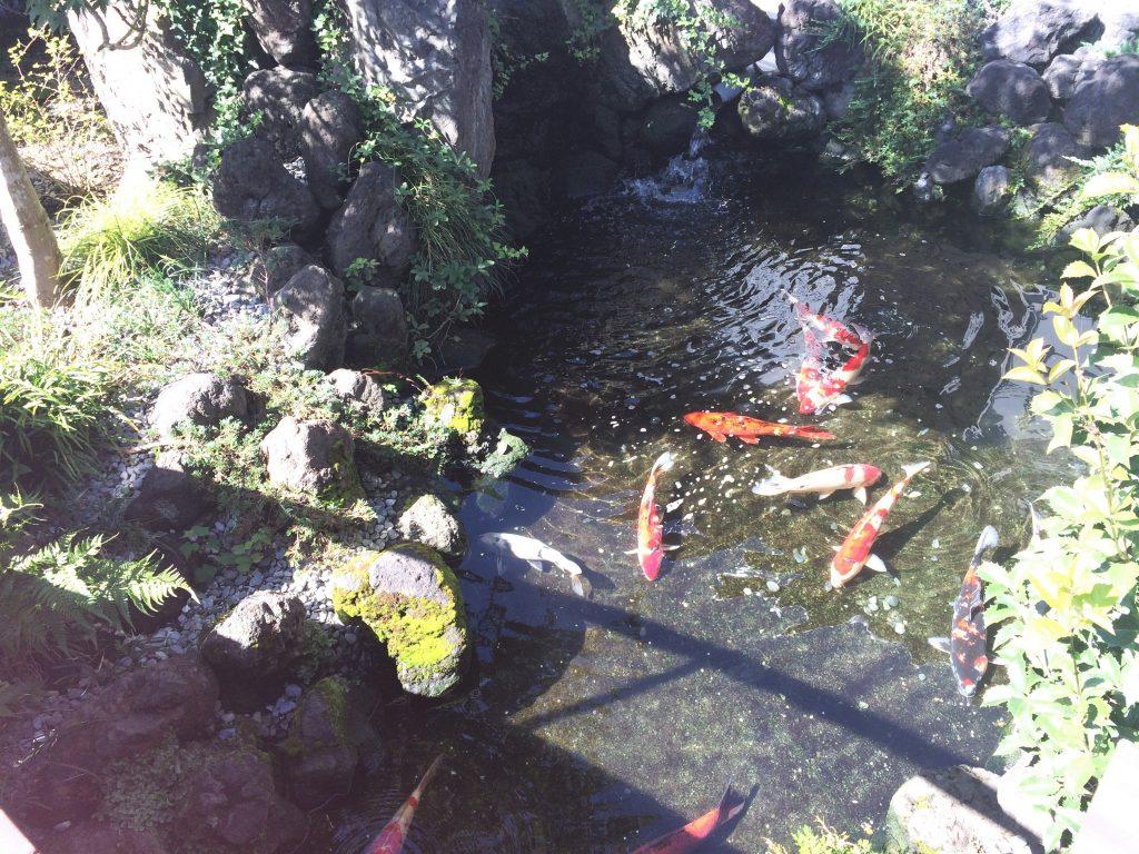 横になれるスペースのすぐそばに鯉が!優雅…