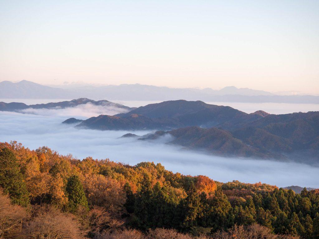 美の山から朝日を受けて輝く木々と雲海
