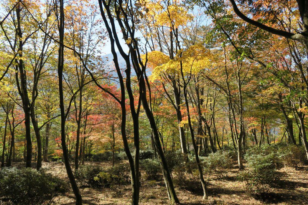 紅葉し始める木々