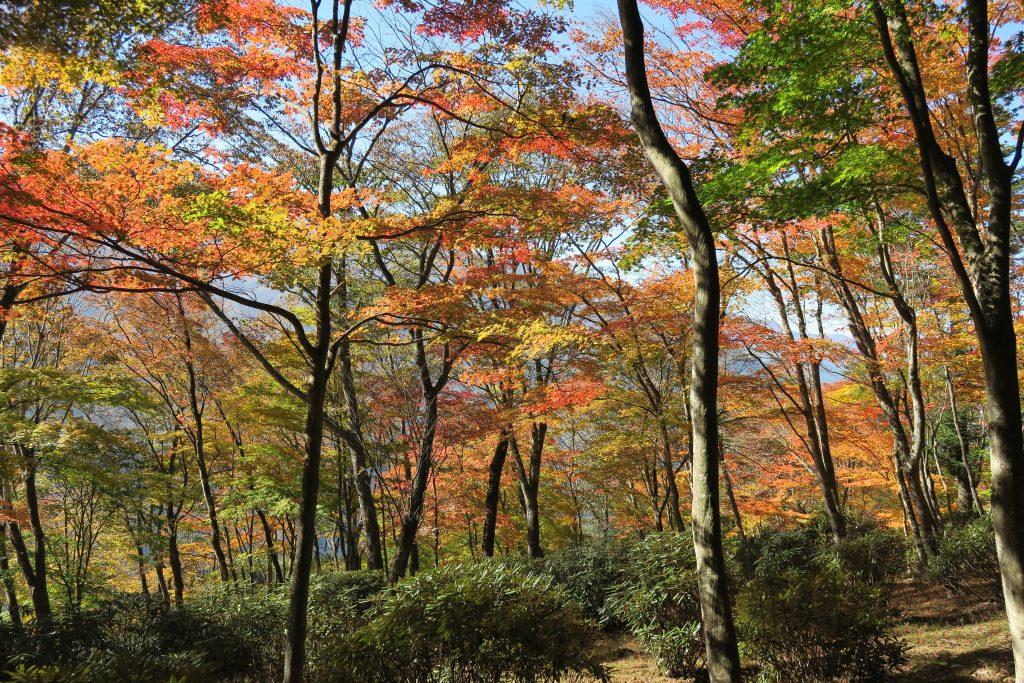 さまざまな色に紅葉する木々