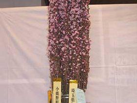 両神道の駅花の展覧会2017年3月