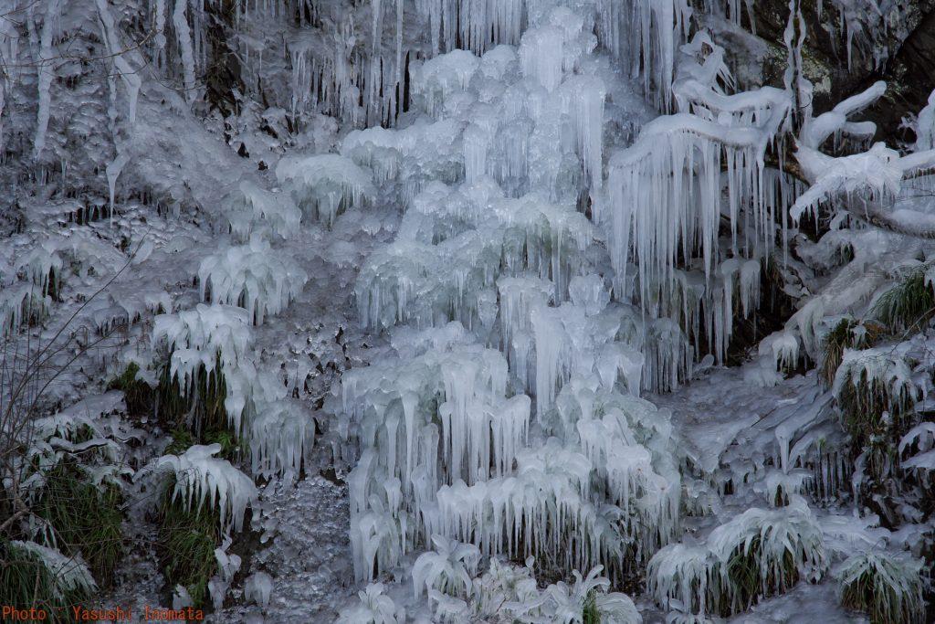 久月氷柱 尾之内百景氷柱 霜柱みたい
