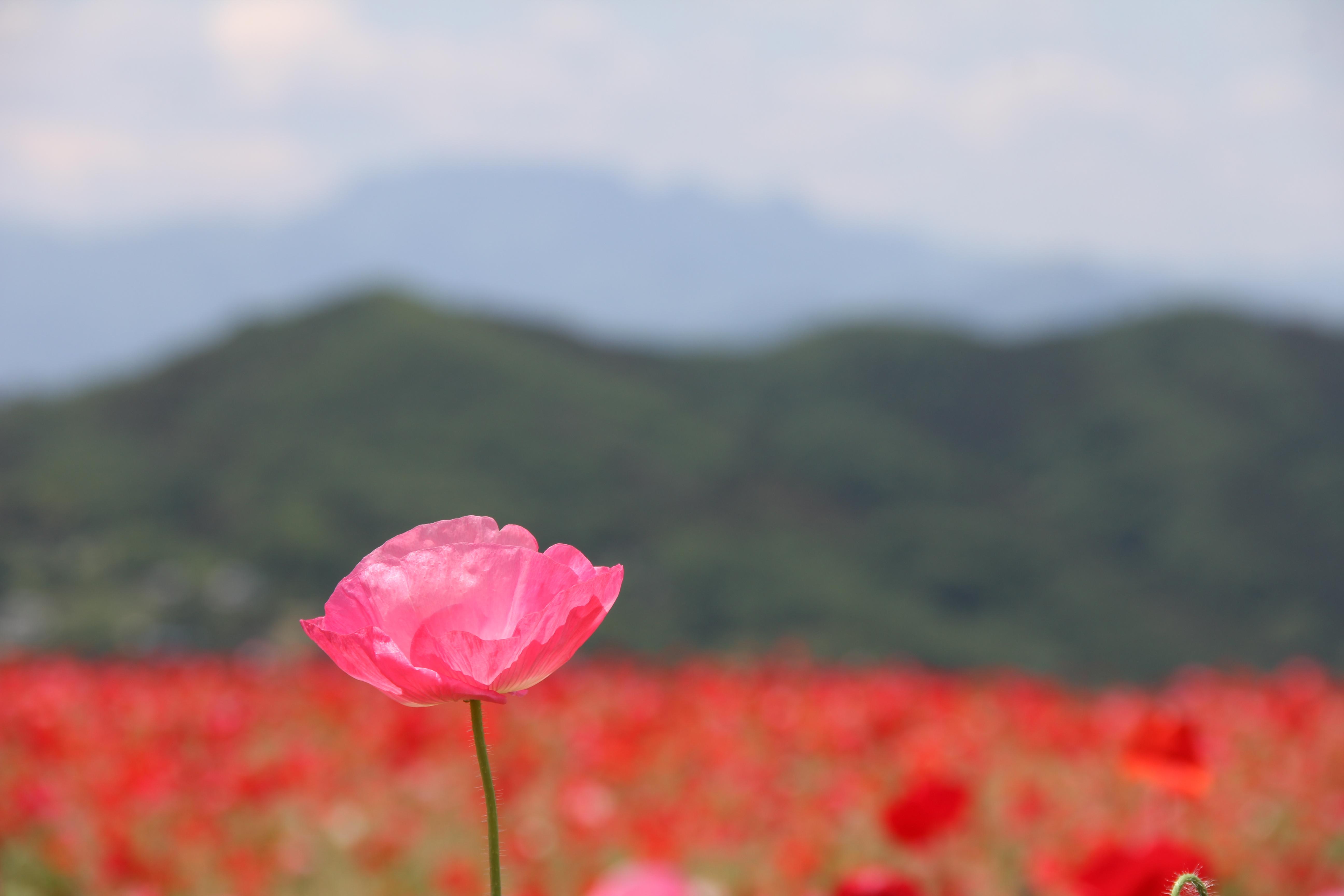 秩父の春 お花見スポット5選