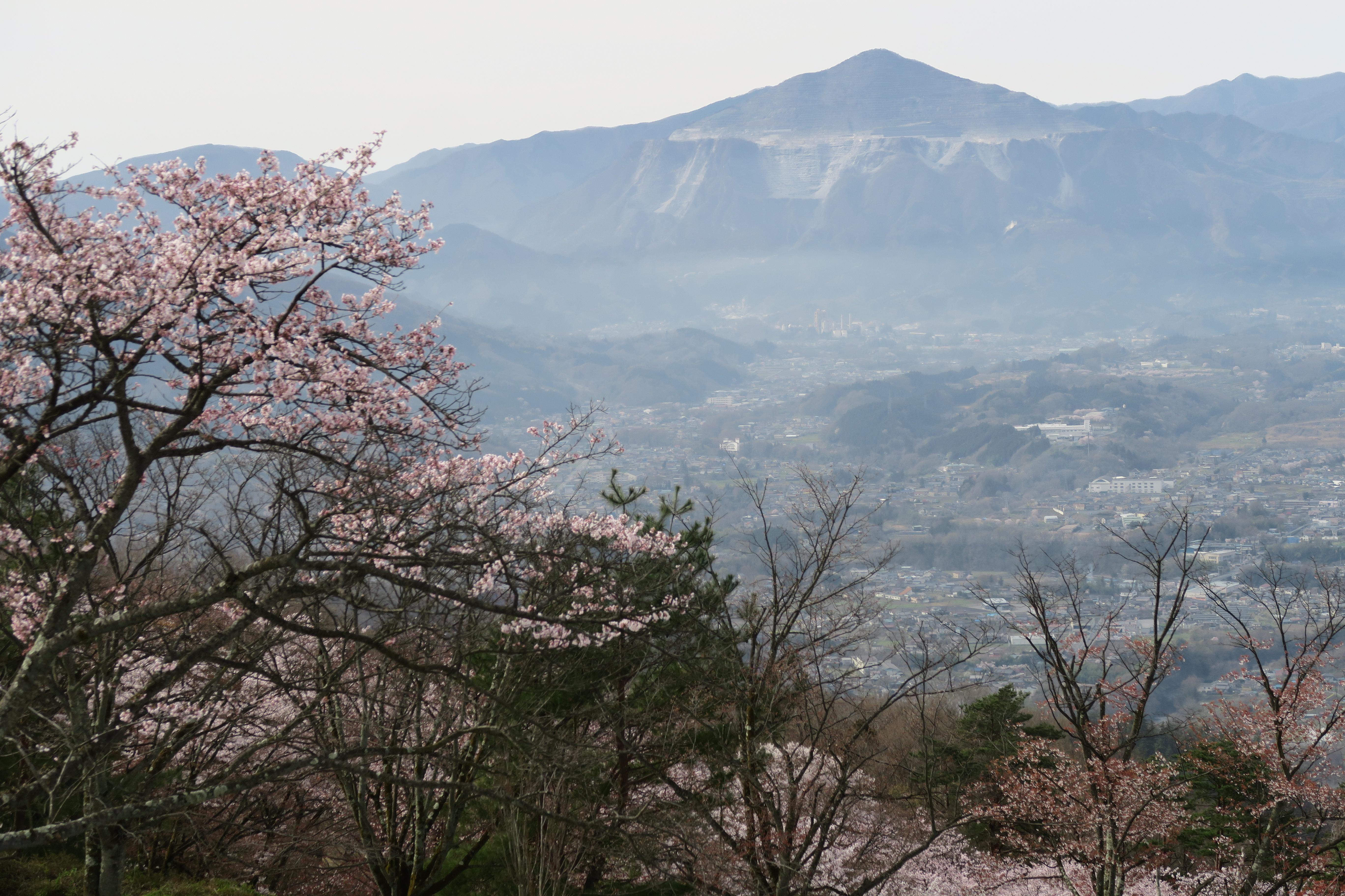 美の山へお花見ハイキング 春