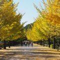 秩父の秋イベント 10月11月12月
