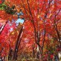 秩父札所1番の紅葉が絶景でオススメ!お寺で楽しむ紅葉狩り