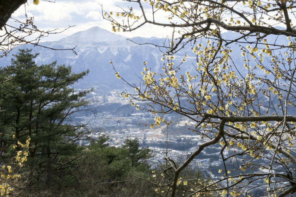 蝋梅と武甲山 宝登山