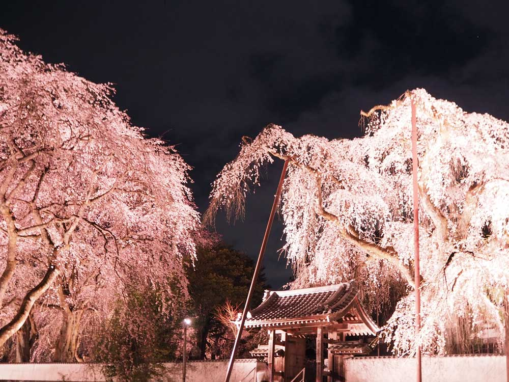 20170407清雲寺ライトアップ