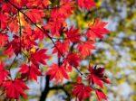秩父大滝の紅葉祭りのイメージ